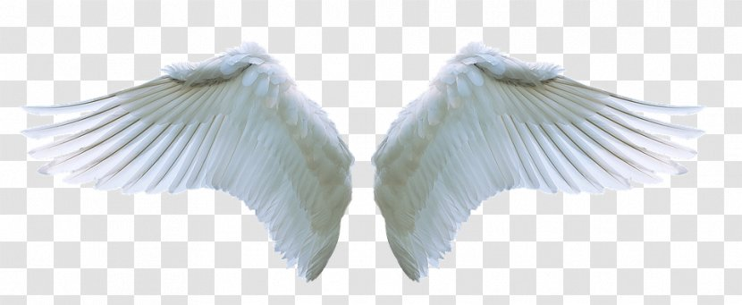 Angel Image Clip Art Stock.xchng Transparent PNG