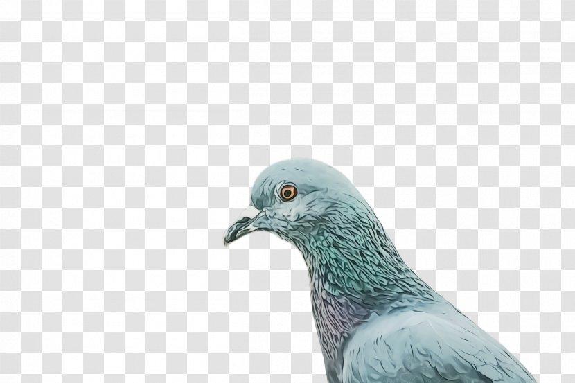 Dove Bird - Pigeon - Wildlife Turquoise Transparent PNG