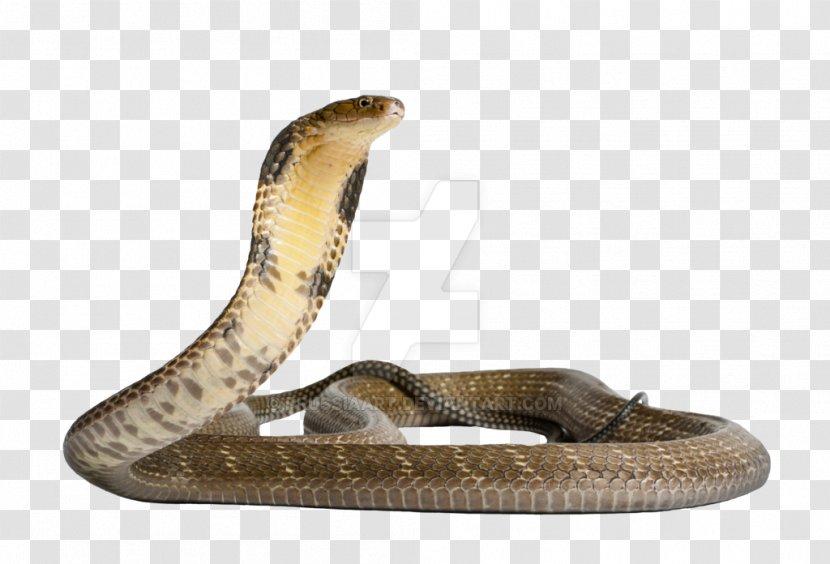 Venomous Snake Gaboon Viper King Cobra - Anaconda Transparent PNG