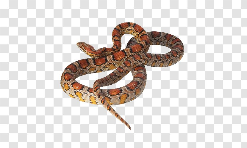 Boa Constrictor Corn Snake Reptile Kingsnakes - Pet - Red Transparent PNG