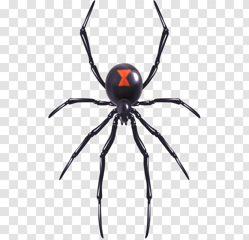Spider Web Southern Black Widow Illustration Redback Toys Transparent Png