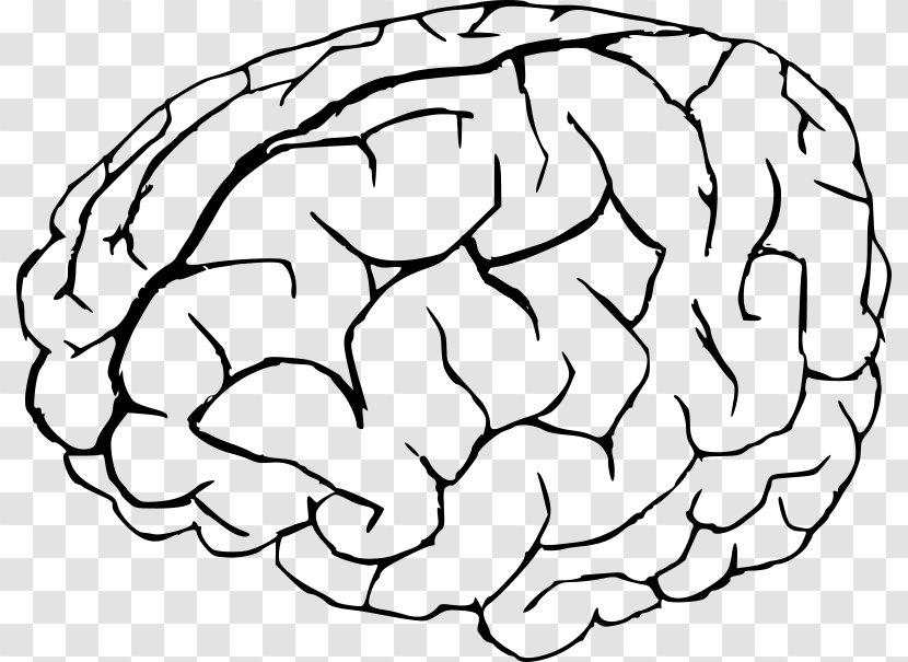 - Coloring Book Human Brain Anatomy - Watercolor Transparent PNG
