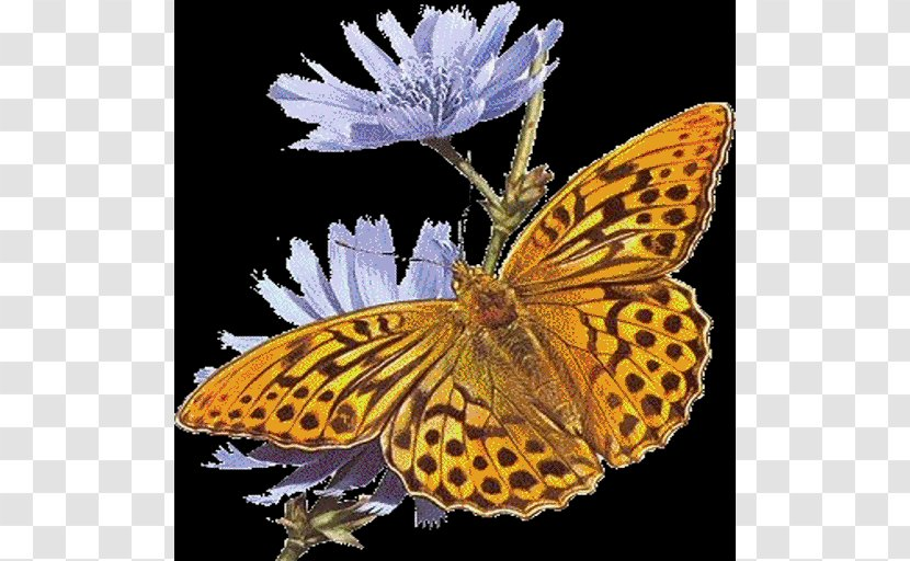 GIF Clip Art Butterfly Animation - Drawing - Chicory Wiki Transparent PNG