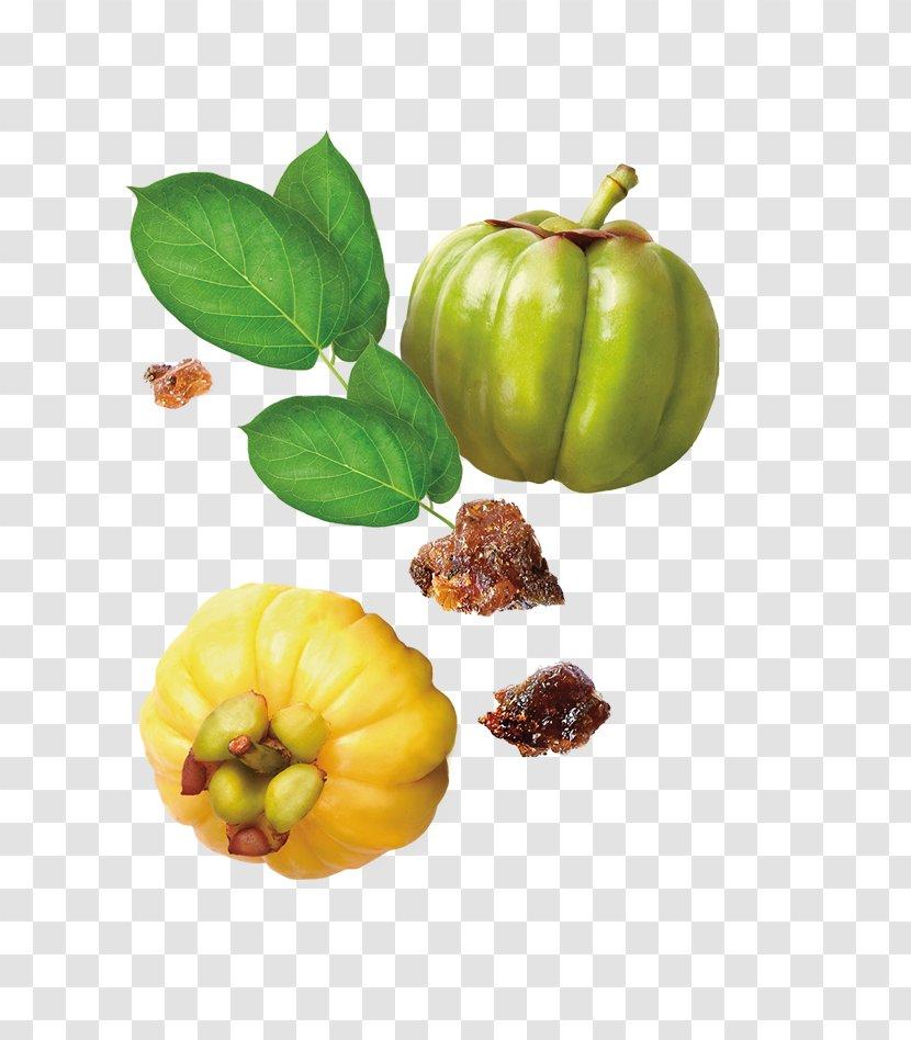 Dietary Supplement Garcinia Cambogia The Himalaya Drug Company