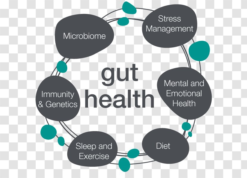 Human Microbiome Project Gastrointestinal Tract Microbiota Gut Flora Probiotic - Body - Health Transparent PNG