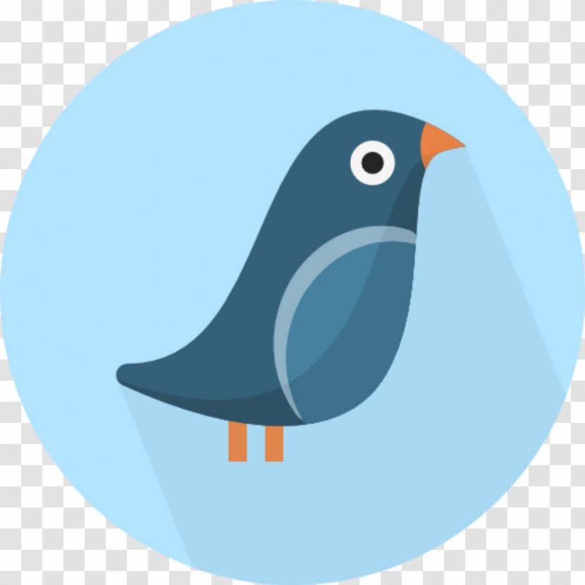 Birds - Wing - Fauna Transparent PNG