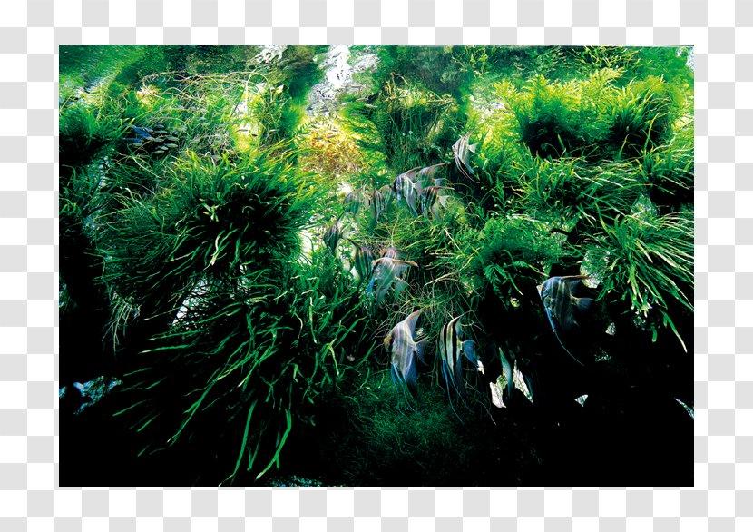 Nature Aquarium Complete Works 1985 2009 Aquarium World Aquascaping Landscape Aqua Design Amano Transparent Png
