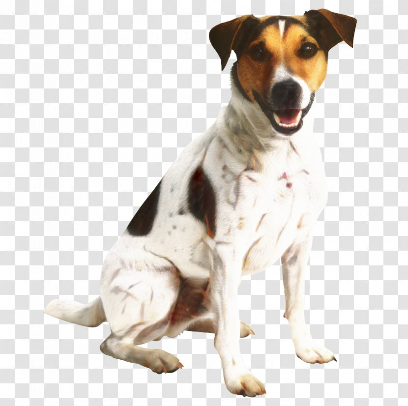 Dog And Cat - Pet - Jack Russell Terrier Rare Breed Transparent PNG