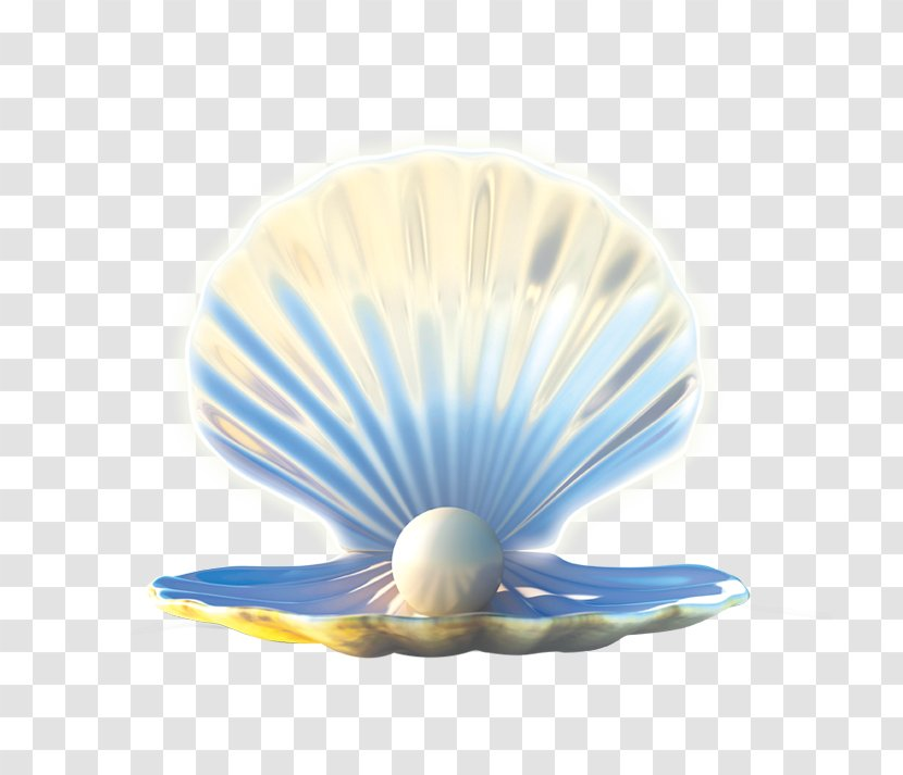 Seashell Pearl Jewellery - Shell Transparent PNG
