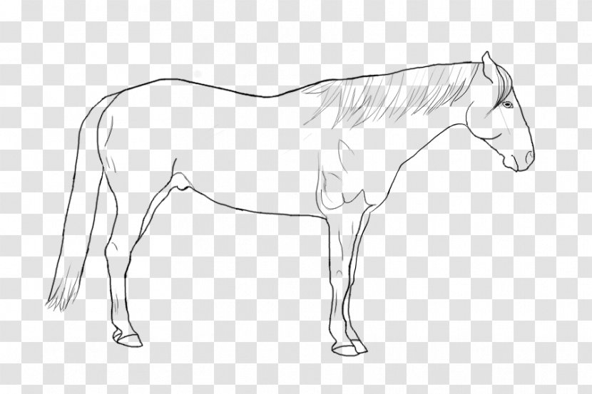 Foal Pony Mustang Rein Mane - Horse Transparent PNG