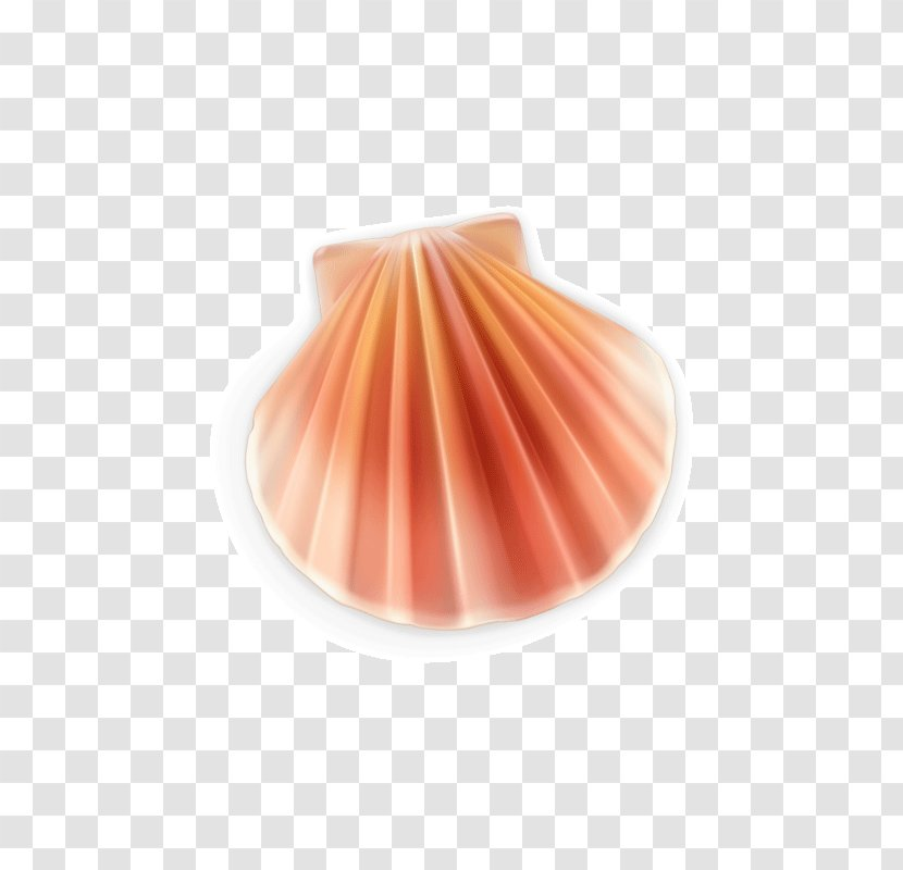 Euclidean Vector Seashell Pearl - Conch - Shell Cute Transparent PNG