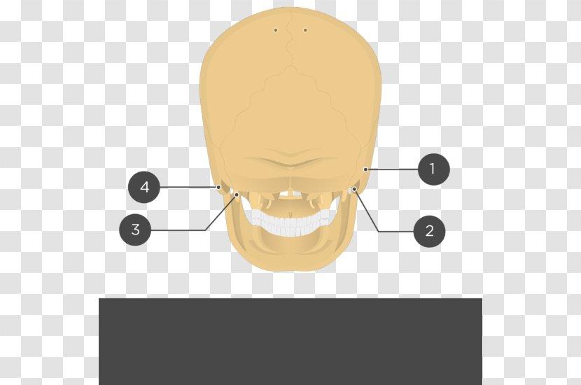 Stylomastoid Foramen – Medical definition of stylomastoid foramen: