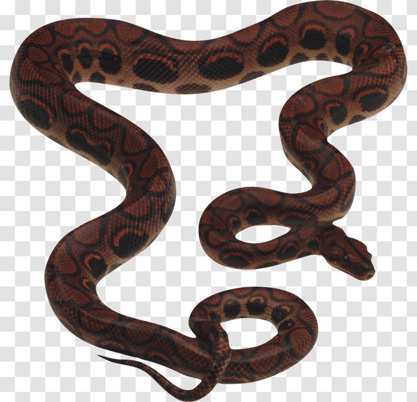 Snake King Cobra Clip Art - Serpiente Transparent PNG