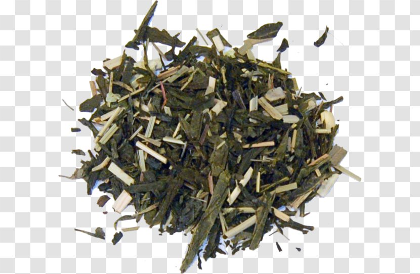Nilgiri Tea Hōjicha Plant - Assam - Thai Transparent PNG