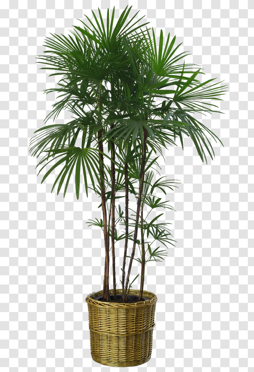 Flowerpot Houseplant Seed Bonsai Borassus Flabellifer Streetlight Transparent Png