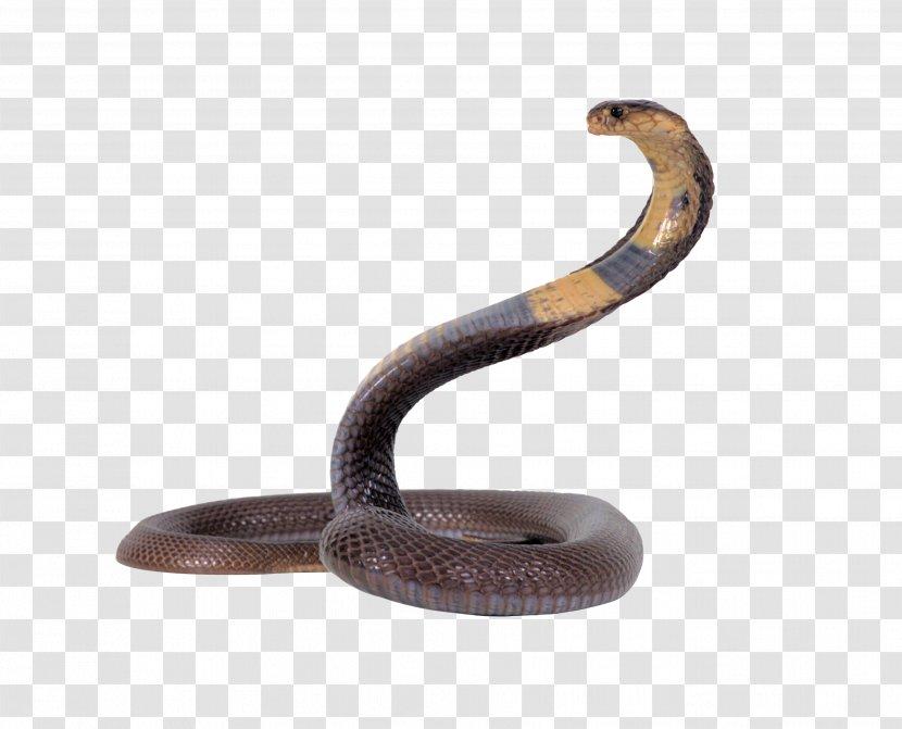 Snake King Cobra - Download Transparent PNG