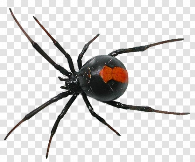 Spider Insect Cockroach Ant Pest Control Transparent Png