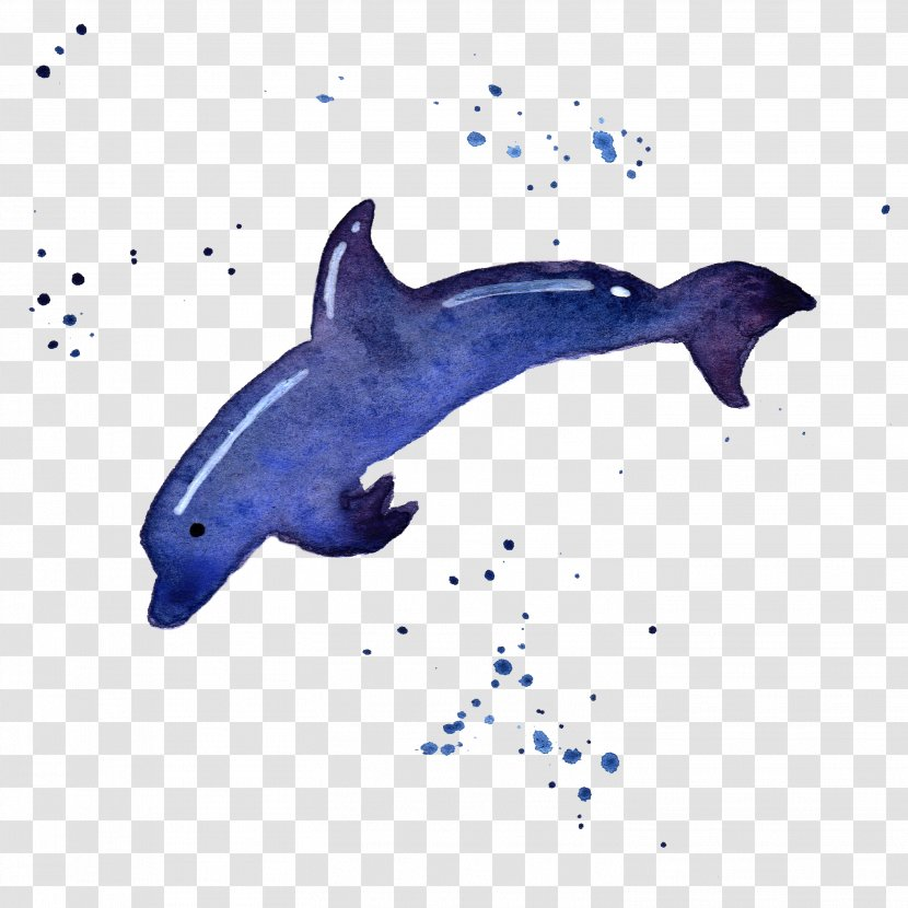 Common Bottlenose Dolphin Tucuxi Rough-toothed Porpoise - Whale - Nature Sea Animals Transparent PNG