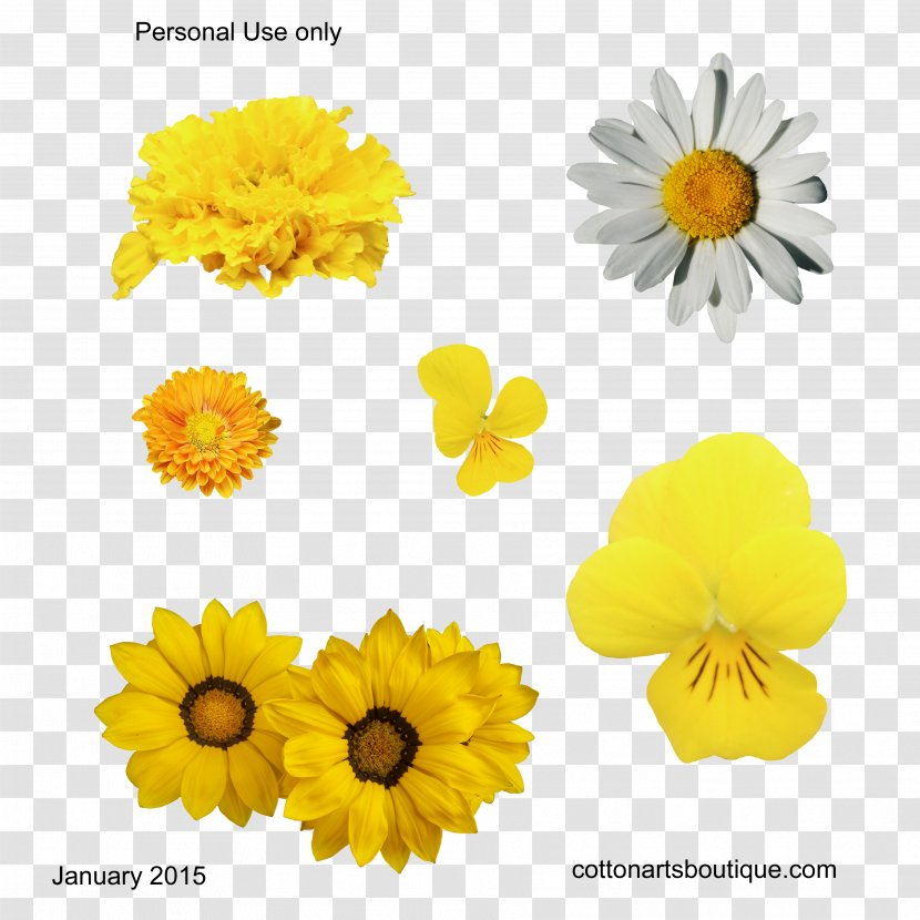 Cut Flowers Yellow Gossypium Herbaceum Cotton - Daisy Transparent PNG