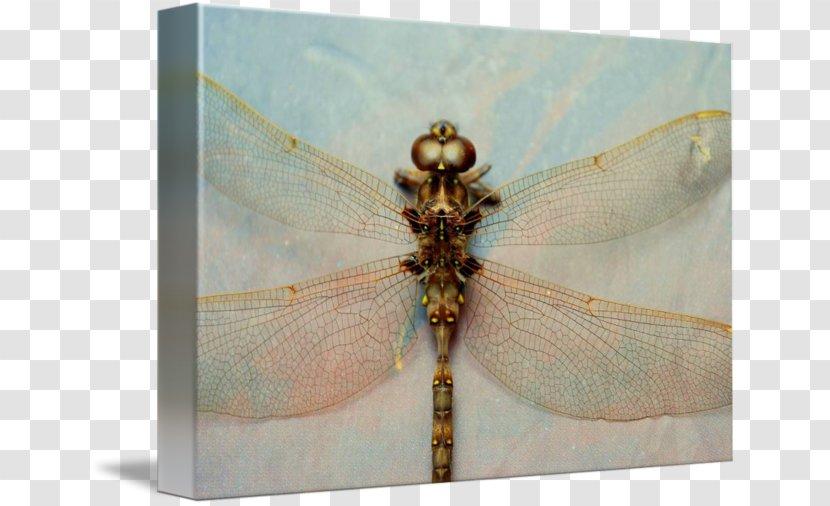Dragonfly - Dragonflies And Damseflies Transparent PNG