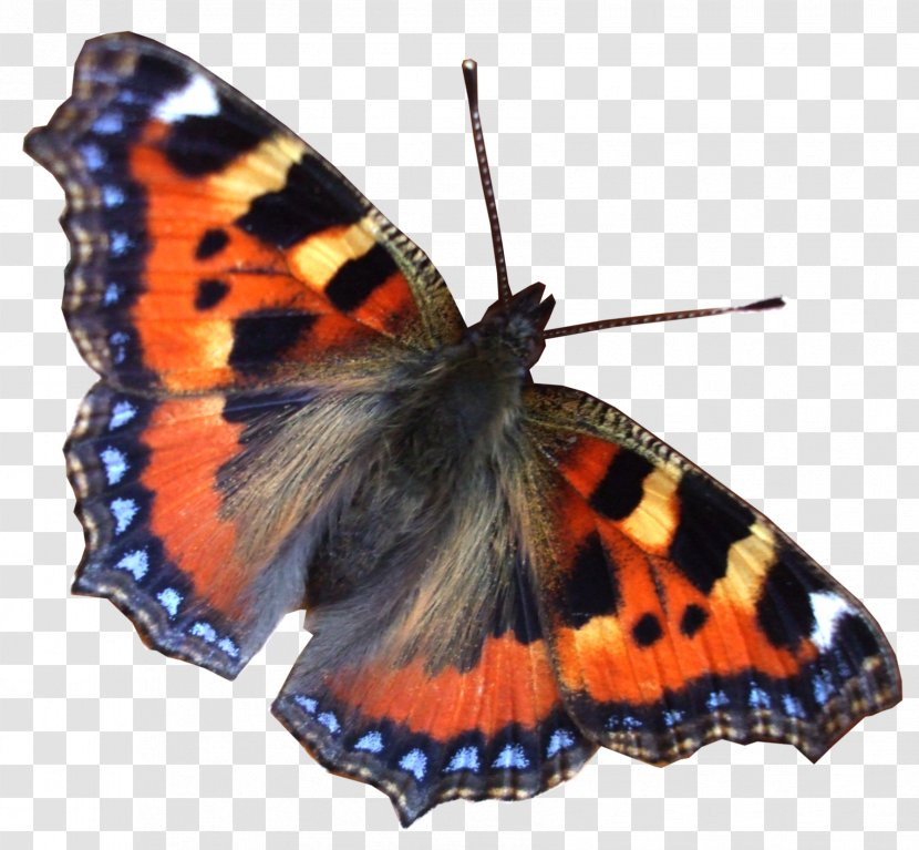 Robinson Contracting Landscaping Llc Garden Organization Landscape Design Butterfly Stamp Transparent Png
