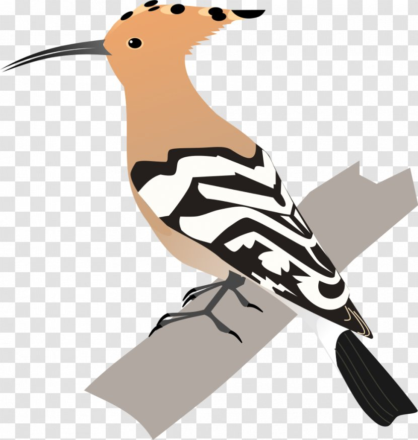 Bird African Hoopoe Animal Clip Art - Water - Birds Transparent PNG
