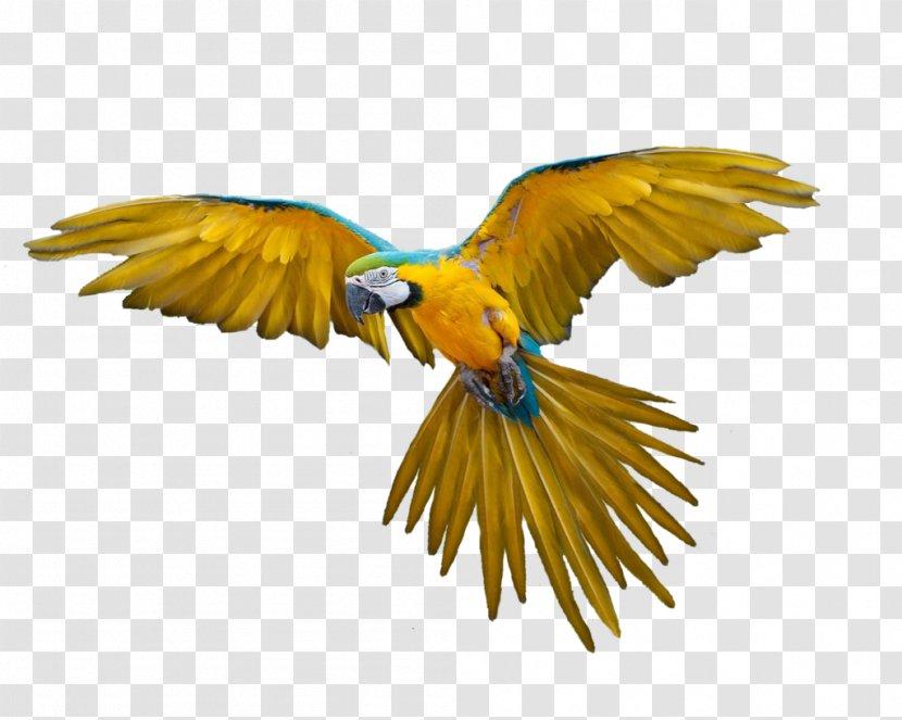 Bird Flight Clip Art Wildlife Flying Parrot Images Free Download Transparent Png