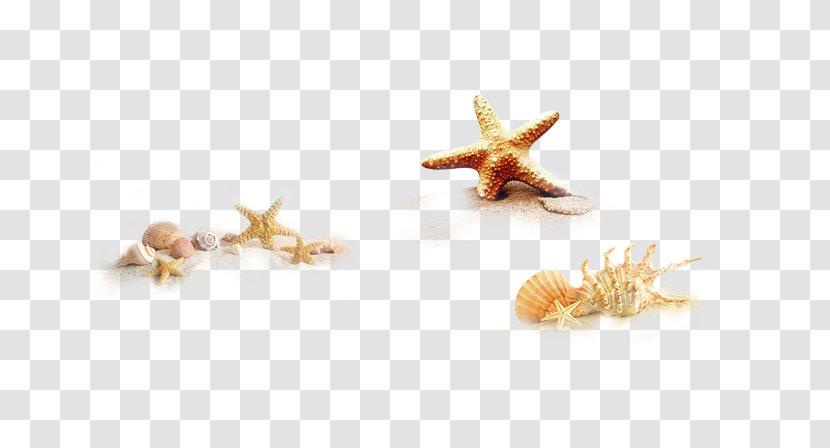 Seashell Icon - Starfish Transparent PNG