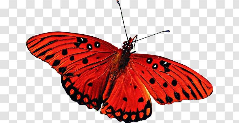 Butterfly Desktop Wallpaper High Definition Television 1080p Widescreen Transparent Png