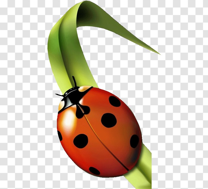 Insect Ladybird Garderie Coccinelles (Les) Aphid Grass - Animal - Ladybug Transparent PNG