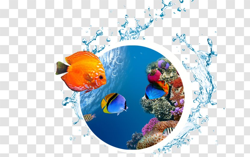 Desktop Wallpaper Sea High Definition Television Underwater Coral Reef Highdefinition Transparent Png