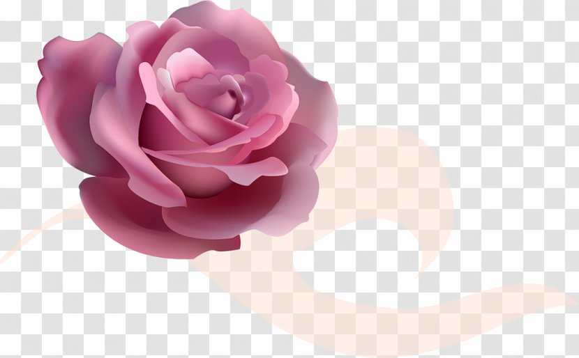 flower garden roses clip art close up transparent png pnghut