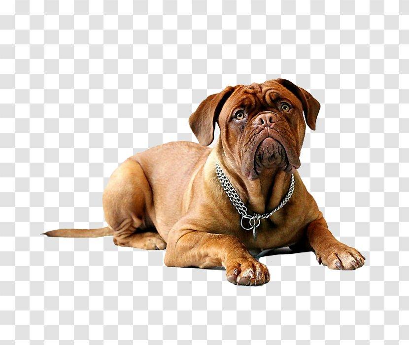 Dogue De Bordeaux English Mastiff Dogo