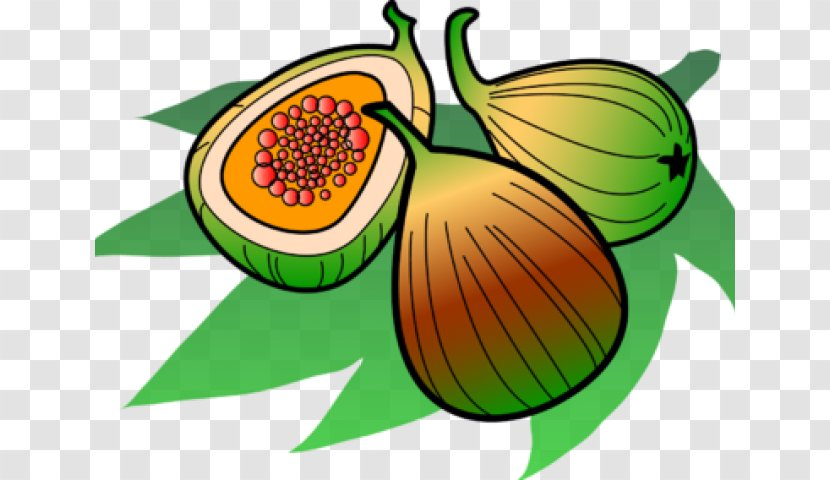 Clip Art Image Common Fig Cartoon List Of Culinary Fruits Vecteur Transparent Png