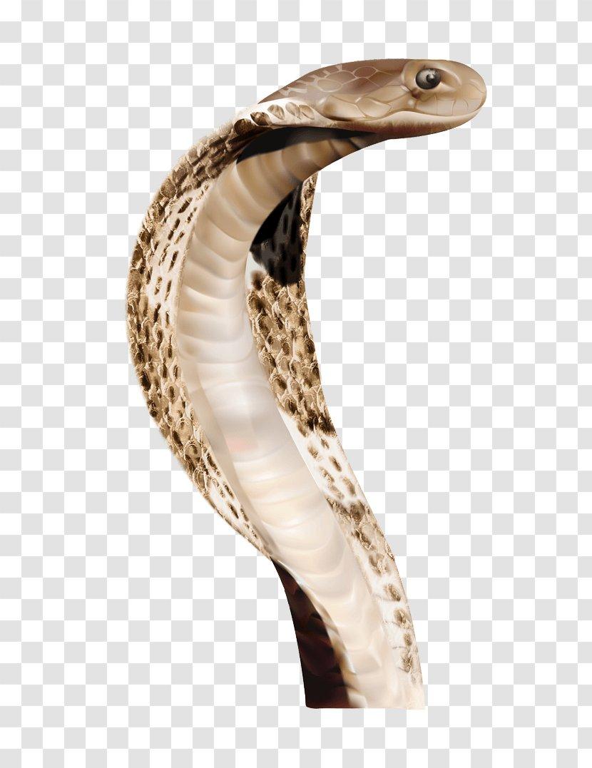 Indian Cobra Snake Animal - Image Picture Download Transparent PNG