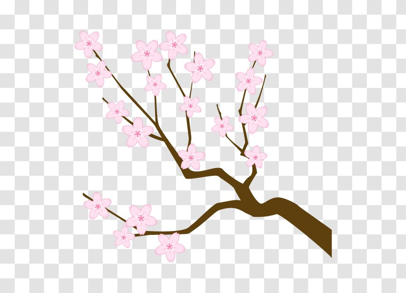 Cherry Blossom Branch Illustration Twig Tree Silhouette Plant Transparent Png