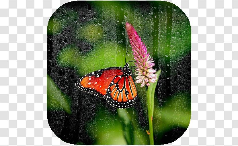 Desktop Wallpaper 4k Resolution Computer Monitors Ultra High Definition Television 4k Moths And Butterflies Transparent Png