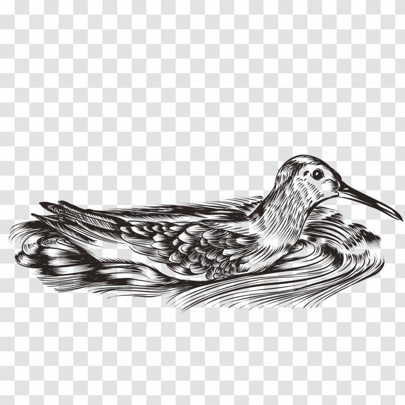 Duck Water Bird Waterfowl - Vector Mandarin Ducks Transparent PNG