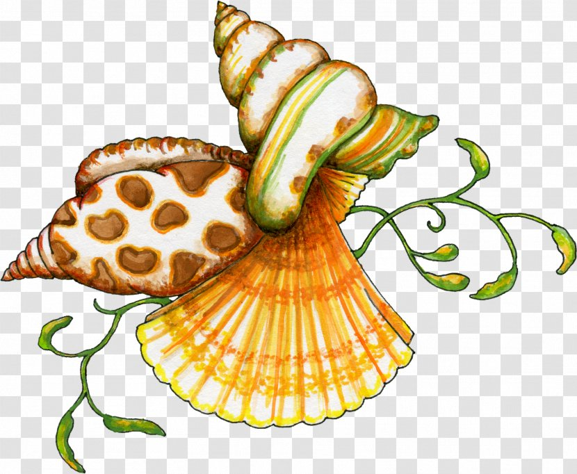 Seashell Free Content Clip Art - Sea - Shells Clipart Transparent PNG