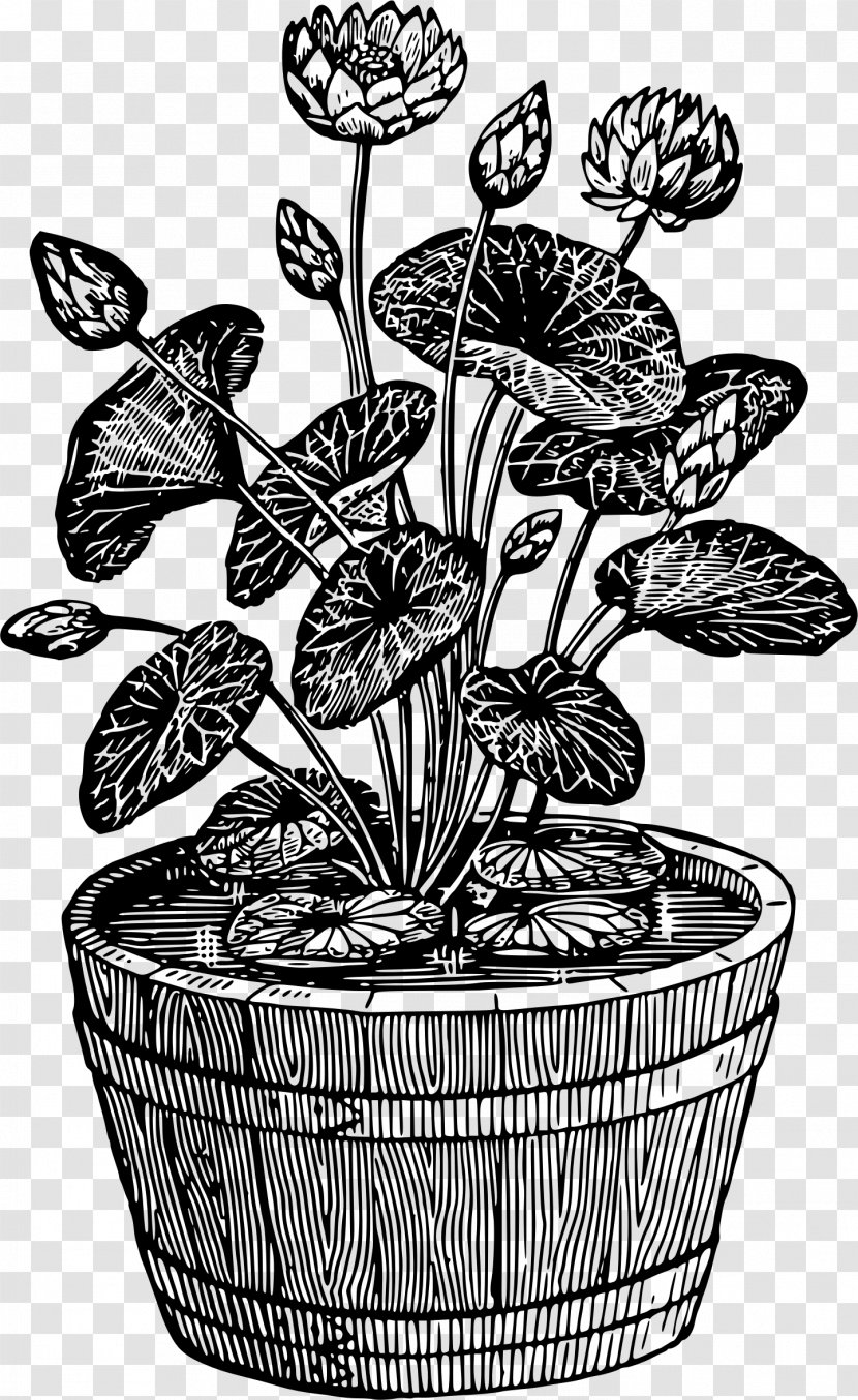 Flowerpot Houseplant Drawing Tree Potted Plant Transparent Png