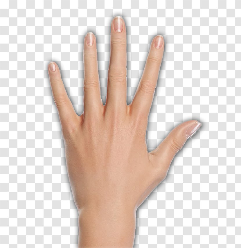 Thumb Woman Hand Model Palmistry Character Structure Transparent Png Hands png, hand image free, free portable network graphics (png) archive. thumb woman hand model palmistry