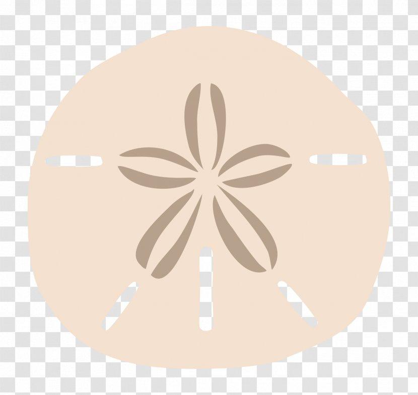 Sand Dollar Drawing Clip Art Seashell Info Transparent Png