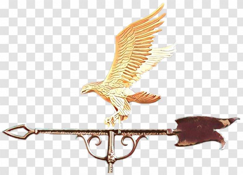 Eagle Wing Bird Of Prey Falconiformes Falcon Transparent Png