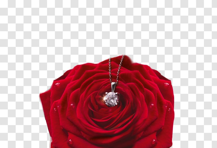 Garden Roses Valentine's Day Gift Flower Party Transparent PNG