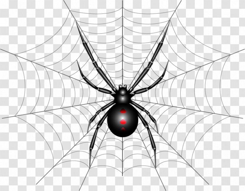 Spider Web Southern Black Widow Illustration Drawing Webb Transparent Png