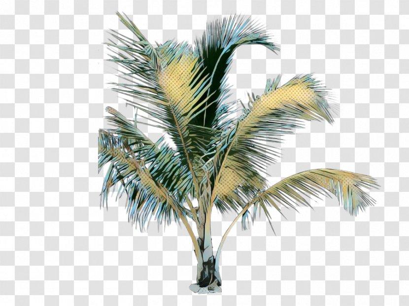 Date Tree Leaf - Sabal Palmetto - Desert Palm Borassus Flabellifer Transparent PNG