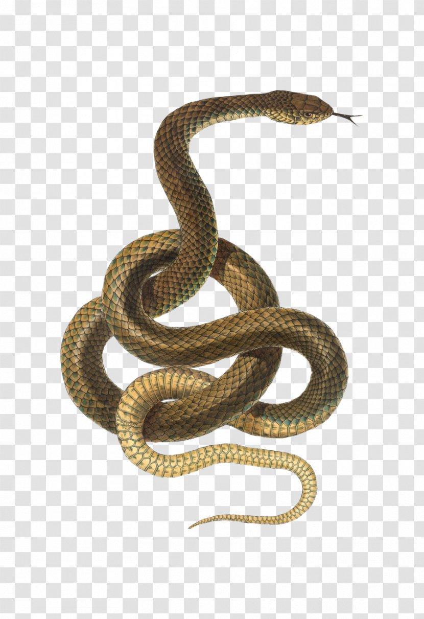 Snake Reptile Desktop Wallpaper - Viper Transparent PNG
