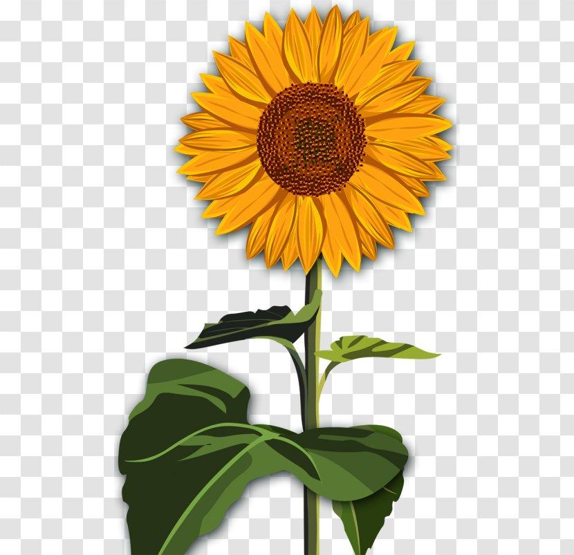 Common Sunflower Desktop Wallpaper Red Clip Art Drawing Flower Transparent Png