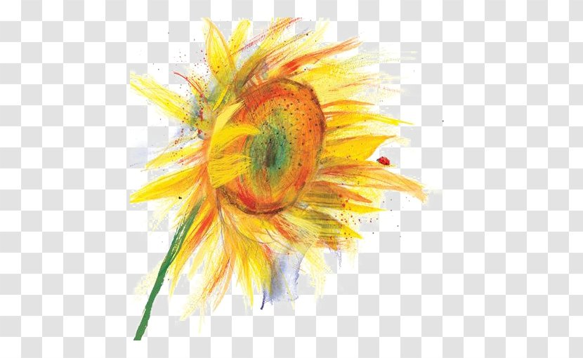 Watercolor: Flowers Watercolor Painting Drawing Illustration Transparent PNG