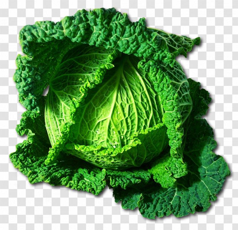 Savoy Cabbage Vegetable Food Clip Art Broccoli